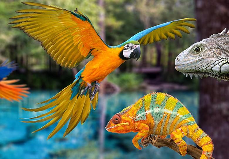 Exotics, Pocket Pets, Avian